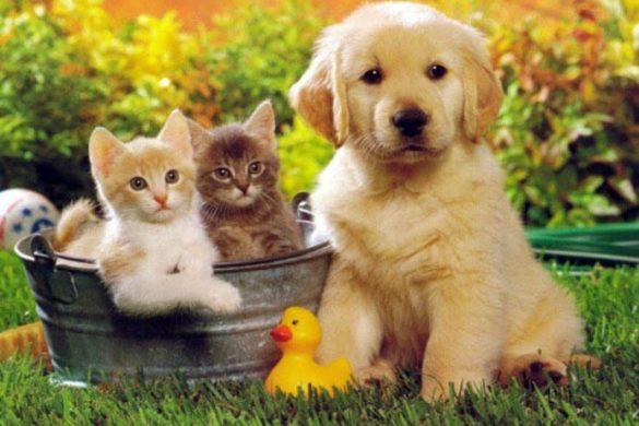 Peygamber Efendimiz ve Hayvanlar